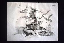 Incisione d'allegoria e satira 8 febbraio 1849, Costituzione Don Pirlone 1851