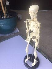 Human Skeleton Model For Anatomy Mini Human Skeleton Model With Metal Stand