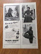 1951 Black White Scottish Scotty Terrier Westie Ad Going on Vacation Travelling