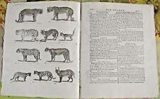 1784 Ancienne Estampe Gravure Estampes EO.Panthère,l'Once,Serval,Jaguar,Ocelot