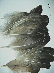 B702 Imitation Eagle Quill Feathers 2//Pkg-White W//Black Tip