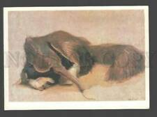 093741 Anteater Portrait by Vatagin Old Color Russian Card