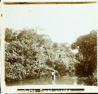 CAMBODGE Forêt Vierge c1910, Photo Stereo Vintage Plaque Verre
