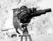 8x10 Print Unusual Image Possum and Movie Camera 1943 #PMC