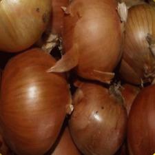1 Oz Yellow Sweet Spanish Onion Seeds - Everwilde Farms Mylar Seed Packet