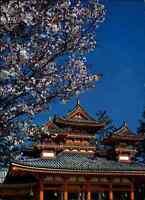 JAPAN Post Card Postkarte Kyoto Heian Shrine Pagode Ansichtskarte color AK