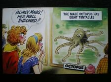 POSTCARD BLIMEY - HE WELL ENDOWED - THE MALE OCTOPUS HAS 8 TENTACLES