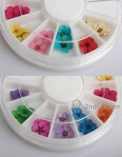 36pcs 12 Color Dried Dry Flower Nail Art Wheel Decoration Manicure Tips BEST
