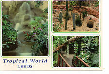 postcard Yorkshire Leeds Tropical World   unposted Dennis