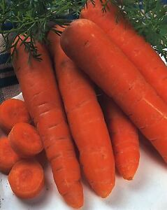 Vegetable - Carrot - Autumn King 2 - 1000 Seeds - Economy