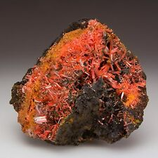 Bright Orange-Red Crocoite Crystals on Goethite from Australia - Old Material!