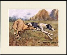 GREYHOUND DOGS COURSING LOVELY DOG PRINT MOUNTED READY TO FRAME