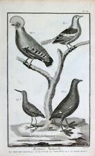 Pigeon Taube Indonesien Tiefland-Felsenhahn Cock-Rock Wasserläufer Blässhuhn