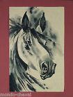 MONGOLIE ! dessin à l'encre de chine sur papier de riz, tête de cheval, horse