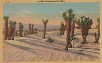 Joshua Trees And Desert Sands Praying Trees Southwest Linen Vintage Postcard