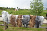 NaturaI Icelandic Genuine Sheepskin rug Sheep skin 3 color soft long wool