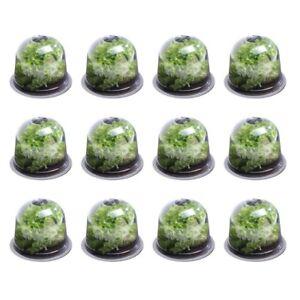 Cloche à salades x12 serre de protection pour plants