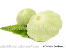 Zucchini WHITE SCALLOP weiss 10 Samen  SEHR SELTEN zartes Gemüse Kürbis