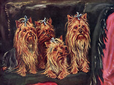 YORKSHIRE TERRIER CHARMING DOG GREETINGS NOTE CARD FOUR DOGS SIT ON COUCH YORKIE