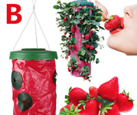 Strawberry Upside Down Hanging Planter. the easiest wat to grow strawberries!