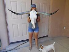 """STEER SKULL LONG HORNS COW 4'  2""""  LONGHORN bull HEAD mounted"""