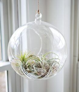 2pcs Hanging Clear Glass Globe Ball Candle Tea Light Holder Air Plant Terrarium