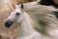 BOB LANGRISH - UNICORN POSTER 24x36 - HORSE 34332