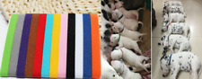 12X Colours Adjustable Newborn Puppy Whelping Pet Kitten ID Collar Band Set