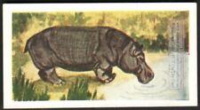African Hippopotamus 60+ Y/O Ad Trade Card
