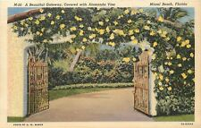 Miami Florida~Beautiful Gateway Covered With Alamanda Vine~1940s Linen PC