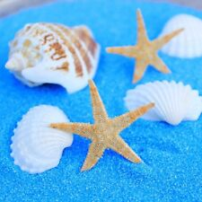 20pcs Natural Starfish Crafts Decor Mini 3cm-5cm Ornaments For Micro-Landscape