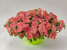 """Trailing Petunia Seeds Success Salmon 25 Pelleted Seeds """"NEW"""" true color"""