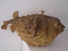 cabinet de curiosité poisson. fish curiosity cabinet