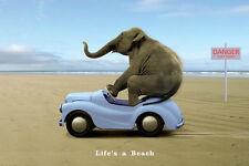 Life's a Beach Poster! Elephant Beach Funny Beach New Large Mammal life