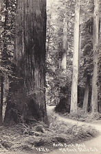 Postcard RPPC MILL CREEK STATE PARK CA North Bank Road redwoods unused
