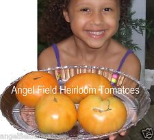 """Garden Seeds """"20 Kellogg's Breakfast Heirloom Tomato Seeds Organic"""