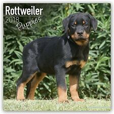 Rottweiler Puppies 2018 Wall Calendar - Adorable pics of these chunky pups