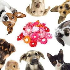 30 Pcs Dog Cat Puppy Pet Hair Bows Groomings Rubber Bands Clips Flower Headwear