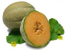 ROCKMELON Hales Best 20+ seeds *ORGANIC* fruit vegetable garden Spring heirloom