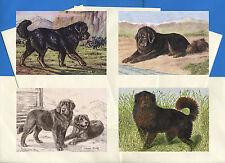 Tibetan Mastiff Pack Of 4 Vintage Style Dog Print Greetings Note Cards