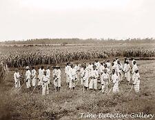 African American Juvenile Chain Gang - 1903 - Historic Photo Print