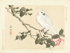 White Cockatoo on Camelia by Aoki Kosaburo 75cm x 57.7cm Canvas Print