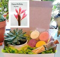 GIFT BOX Succulent Plant Candle Happy Birthday Card Mother of Millions 006-K01