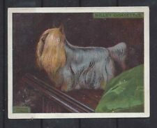 1915 OriginaL UK Wardle Dog Art Study Wills Cigarette Card YORKSHIRE TERRIER