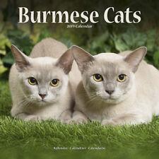 Kalender 2019 Burmese Cats Burma-Katze Burma Katzen Wandkalender