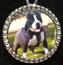 """Dog Pit Bull Black & White Charm Tibetan Silver with 18"""" Necklace"""
