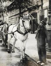 PHOTO de PRESSE MONDIAL Paris + CHEVAL BLANC avec bonnet