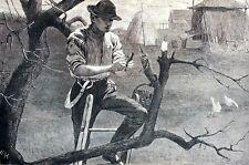 Winslow Homer 1870 SPRING FARM WORK GRAFTING Farmer Grower Matted Engraving