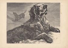Saint Bernard Dogs Rescuing Travelers St. Bernard Monastery Antique Print 1876