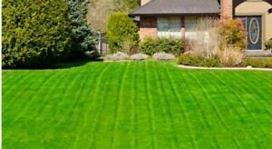 1KG HARD WEARING GRASS SEED - JOHNSON'S - PREMIUM QUALITY